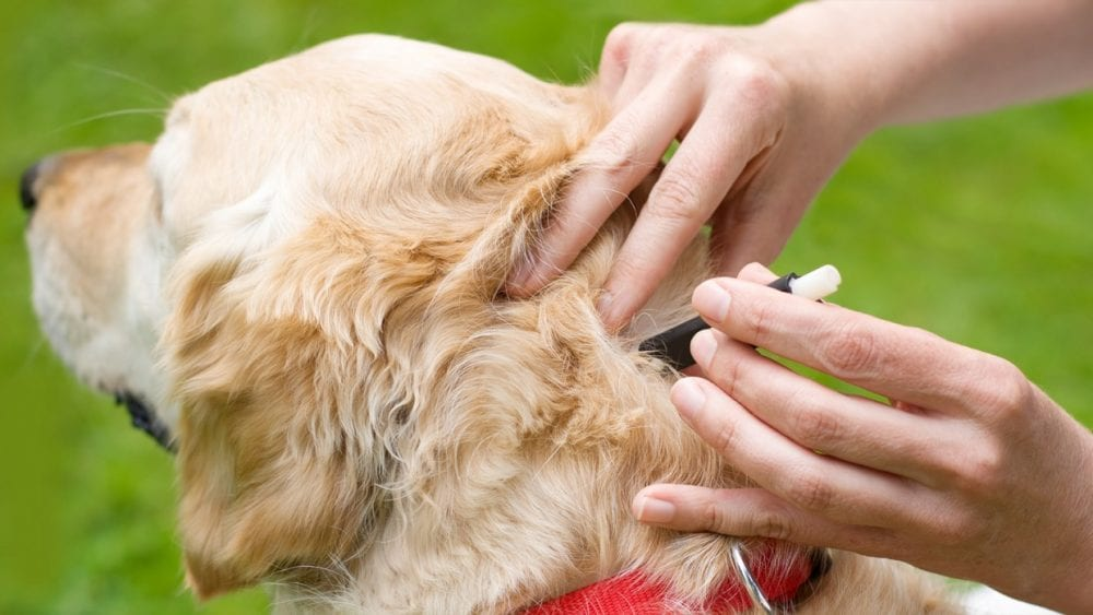 Ways To Prevent Ticks on Your Dog
